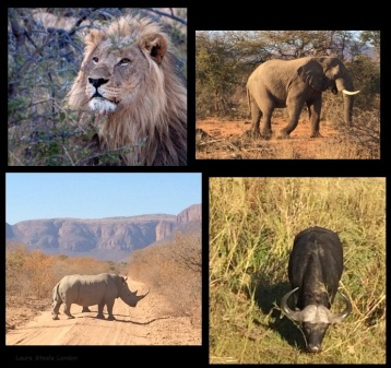 We saw four of the Big Five
