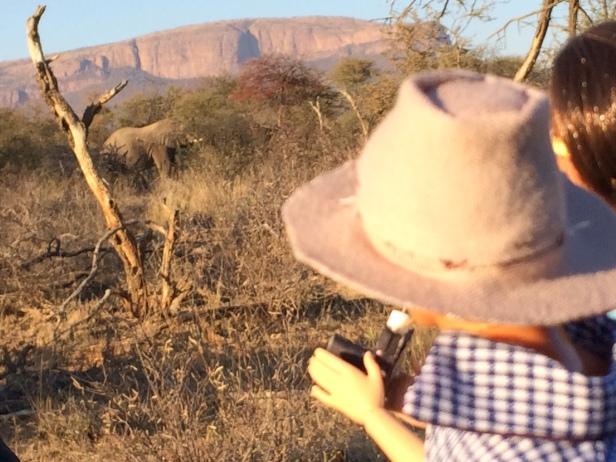 photographing elephant 1