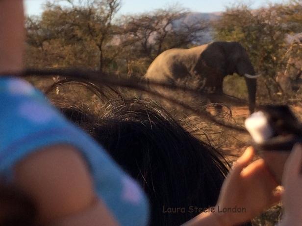 Photographing Elephant 2