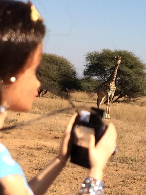 Photographing giraffe.JPG