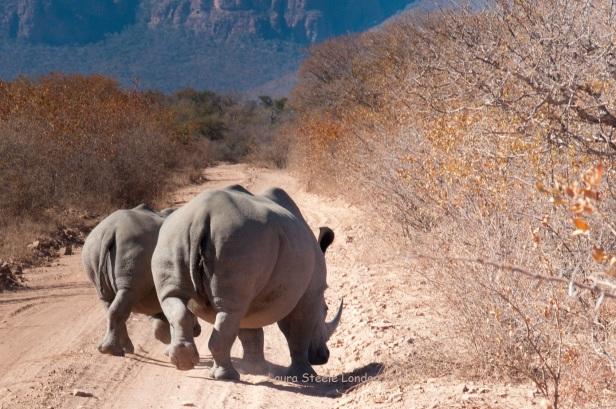 rhino rear view.jpg