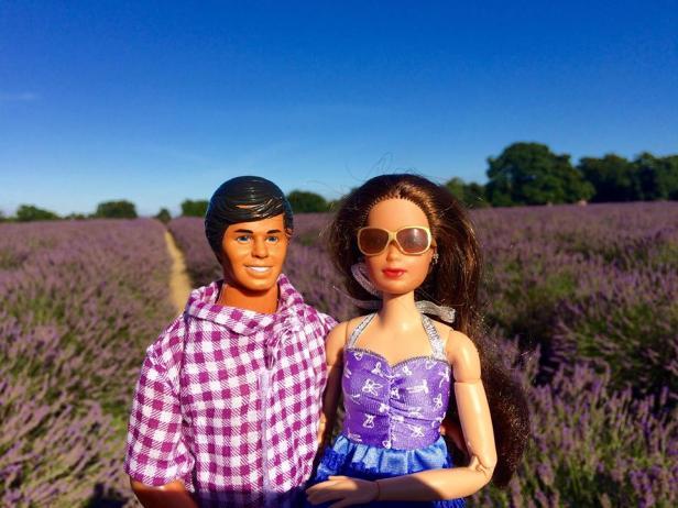 mayfield-lavender